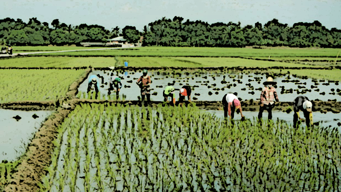 The Top 10 Most Profitable Farm Products to Grow in the Philippines
