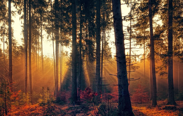FOREST THERAPY FOR BETTER HEALTH