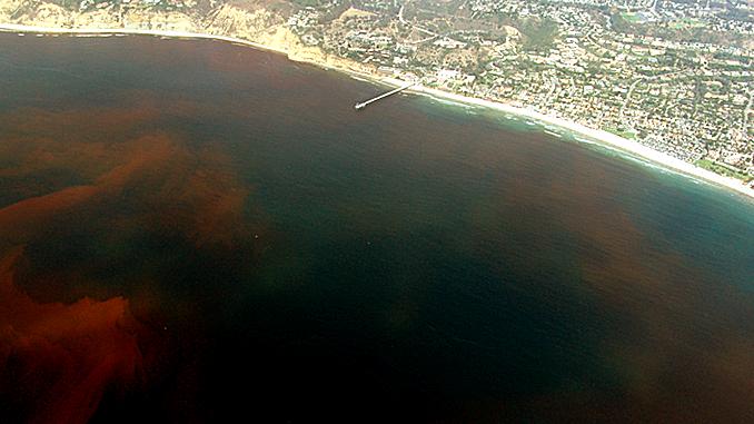 DEAD ZONES IN THE OCEAN