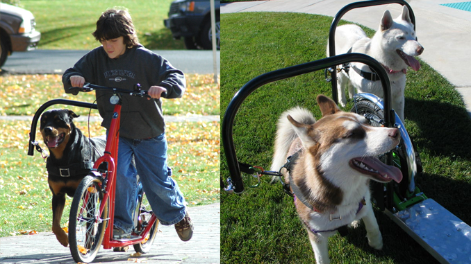 THE FUTURE OF WALKING DOGS