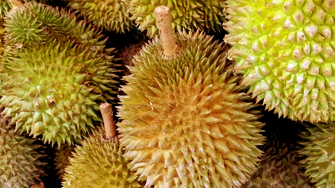 THE SCIENCE OF DURIAN