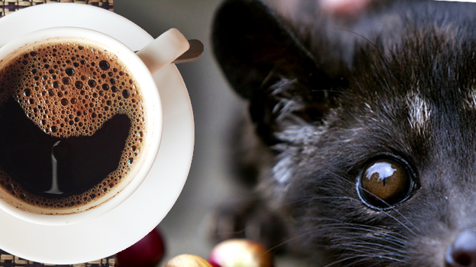 KOPI LUWAK: THE WORLD'S MOST EXPENSIVE COFFEE