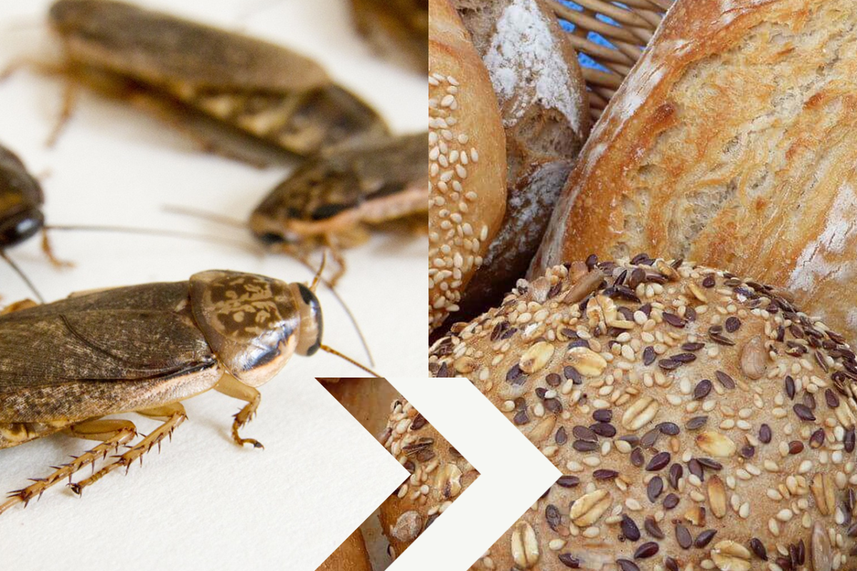 GO NUTTY WITH COCKROACH BREAD