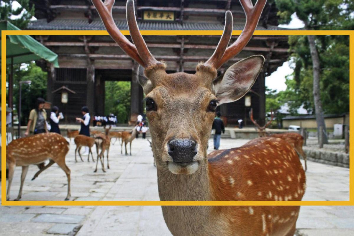 TWO REASONS TO VISIT NARA PARK IN JAPAN