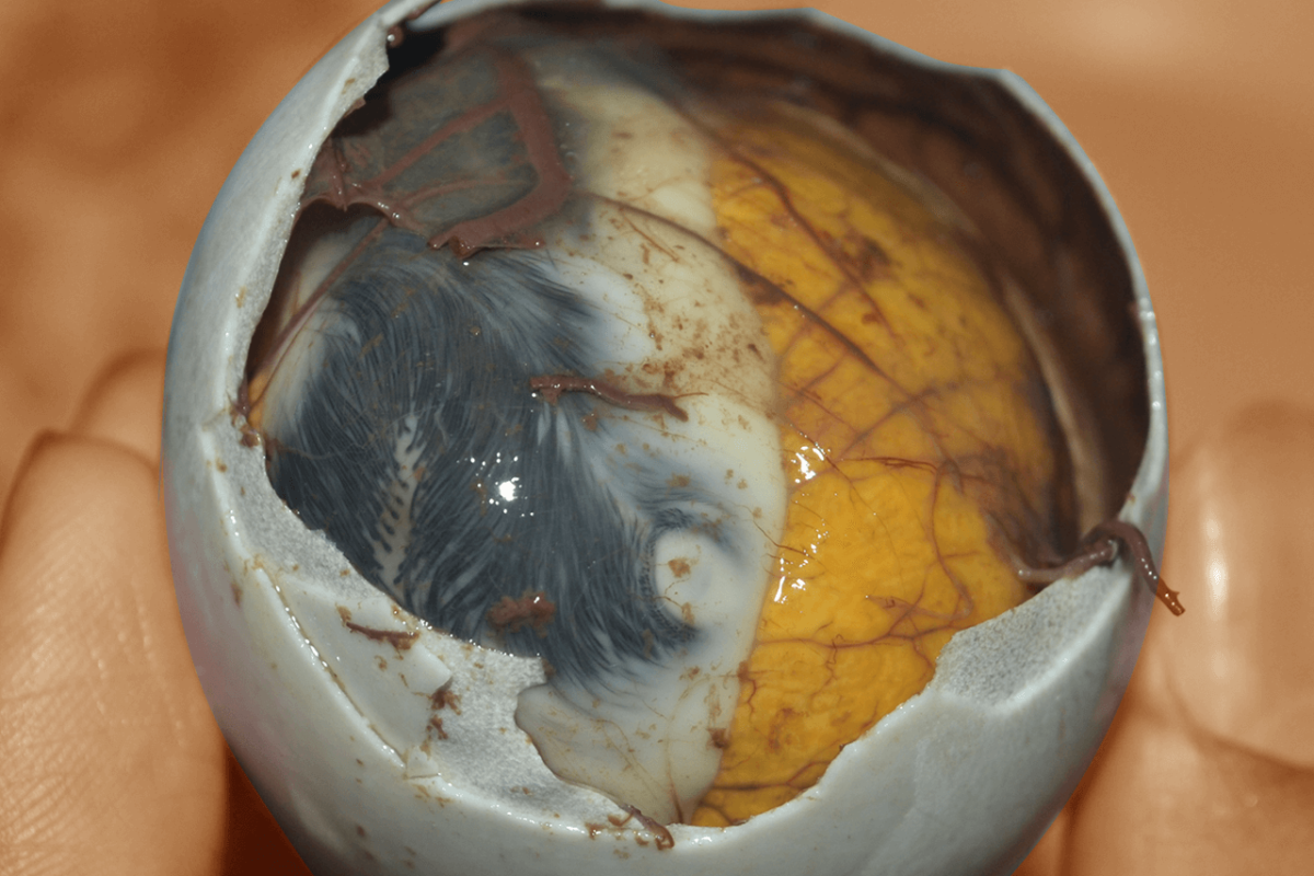 BALUT: THE BIZARRE SUPERFOOD