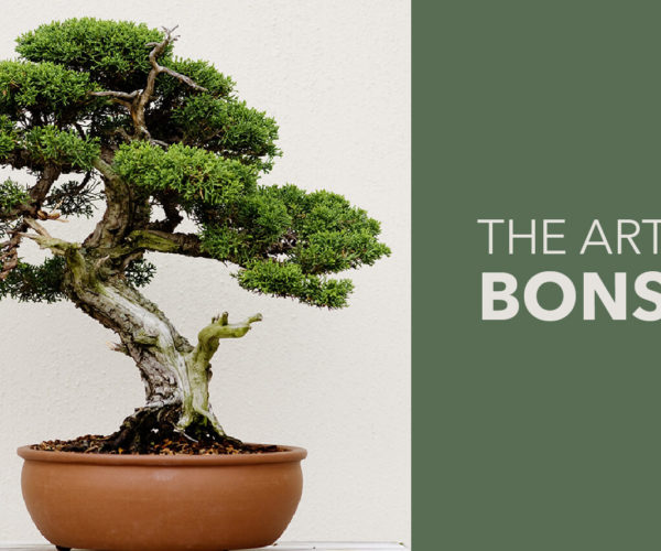 BECOMING A BONSAI ARTIST