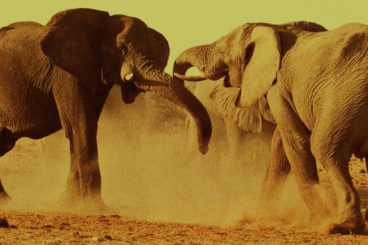 WHAT HAPPENS WHEN AN ELEPHANT DIES?