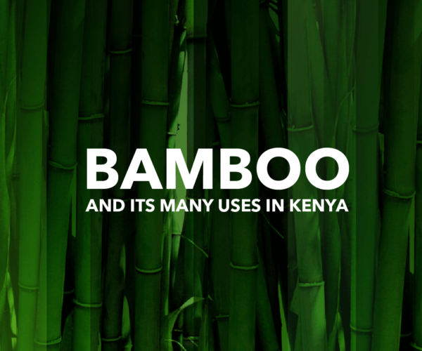 STOPPING LANDSLIDES WITH BAMBOO