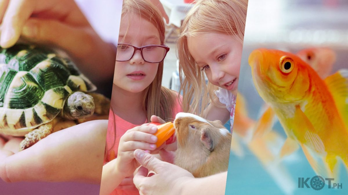 A collage of pictures of a small turtle, two kids and a guinea pig and a goldfish in a fishbowl.