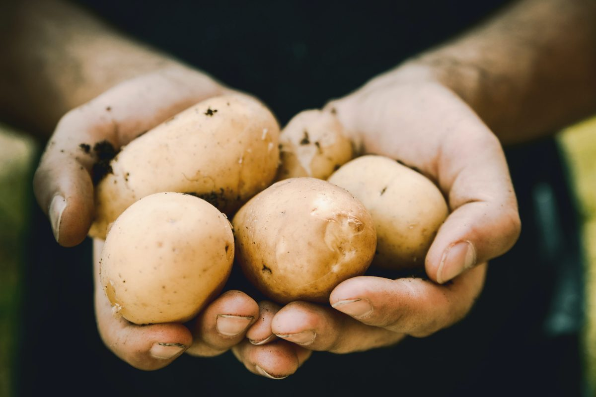 A close up photo of a pair of hands holding up a bunch of potato.